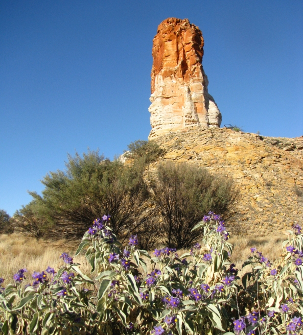 Chambers Pillar with Wild Tomato in the foreground