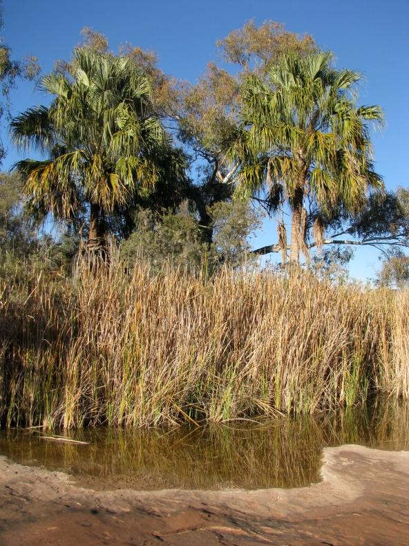 Palm Valley