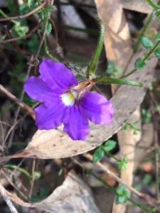 hand-flower-vict